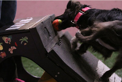 Flyball_1